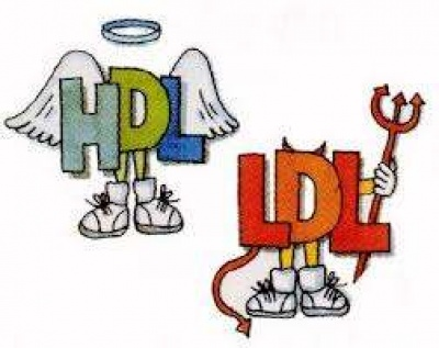 Hdl Ldl