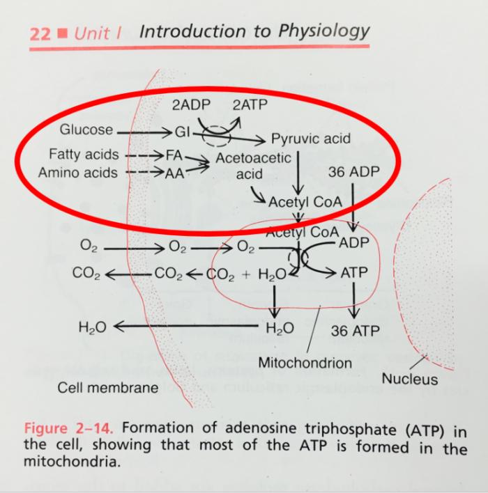 God Mitochondrion 768X777